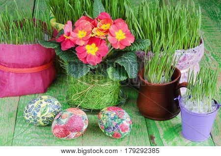 Potted plants and Easter eggs on a green wooden background.
