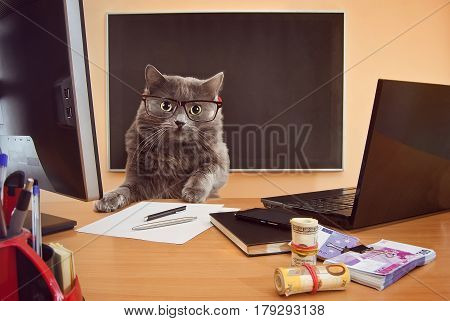 Cat Businessman With Glasses At The Table4