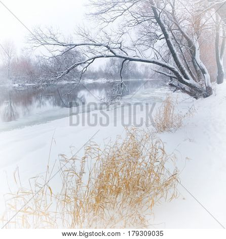 winter river and trees in winter season.winter landscape. Trees covered with snow on river Bank