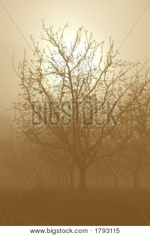 Sepia Tone Bare Walnut Trees