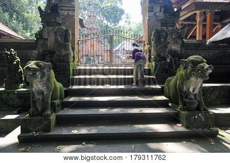 Ubud indonesia - 10 February 2013: Women making offerings at the balinese temple in Ubud Sacred Monkey Forest on Bali Indonesia