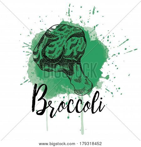 Vector illustration of a brocoli in hand drawn graphics depicted on a green background