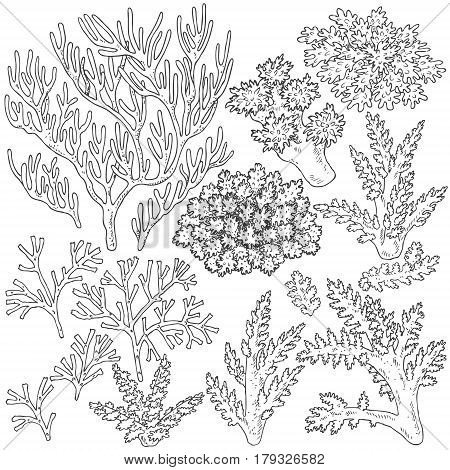 Hand drawn underwater natural elements. Sketch of reef corals. Black and white set illustration coloring page.