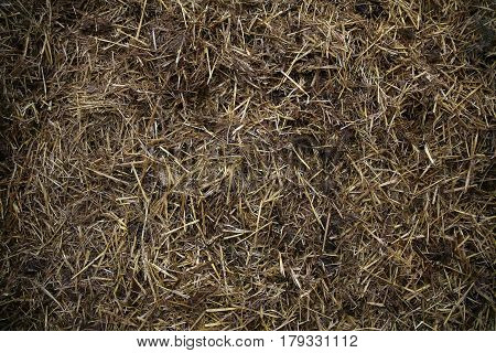 Cattle manure serves as a natural fertilizer for plants