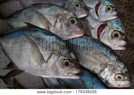 A Flock Of Gray Sea Fresh Fish Counter At The Restaurant: The Fish Lie Diagonally, Creating The Illu
