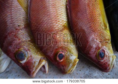 Three Long Red Exotic Marine Fish With Huge Bulging Blue Eyes And A Yellow Belly, Lie In A Row On Th