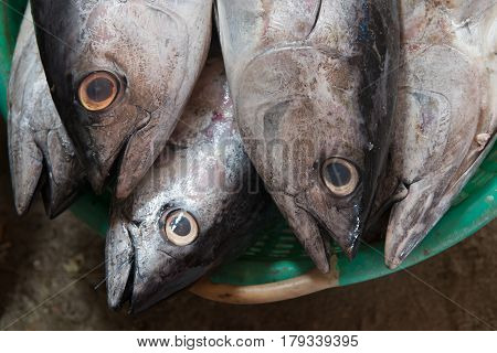 A Large Gray Fish Fresh Sea Tuna In Green Bowl For Sale.