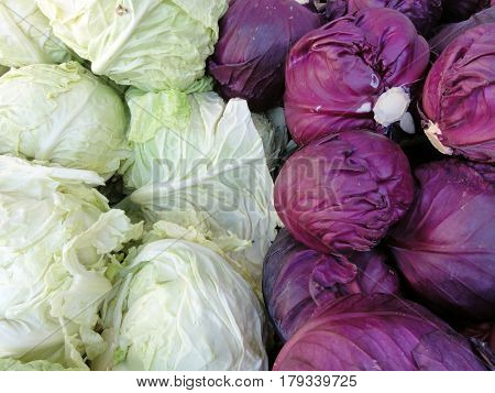 Close-up of Rows of Red and Green Cabbage split in half.