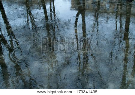 Blue Spring Puddle: Trees Reflect On The Water Surface And Gray House In The Right Upper Corner, Rai