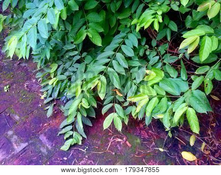 House's plants. Plants with leaves. Some leaves are greener than others