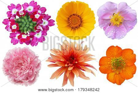 Collection of colorful geum, primrose, rose, peony, dhalia,   isolated on white background
