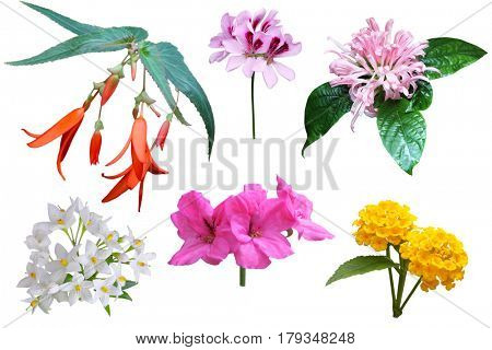 Set of cluster flower isolated on white background