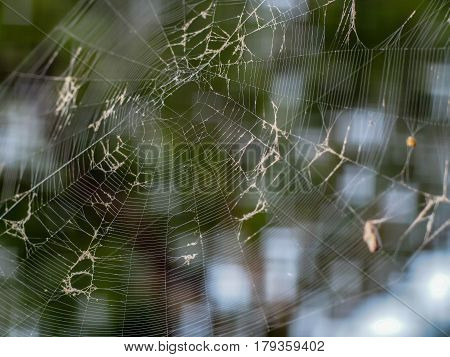 A spider web awaiting to trap some food for the day