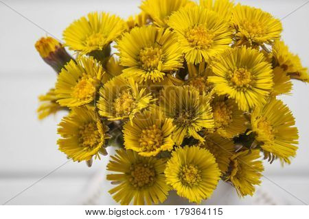 Bouquet  Colts Foot or Tussilago on a white background