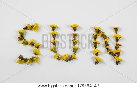 Word  «Sun» made of a spring flowers coltsfoot or tussilago on white  background