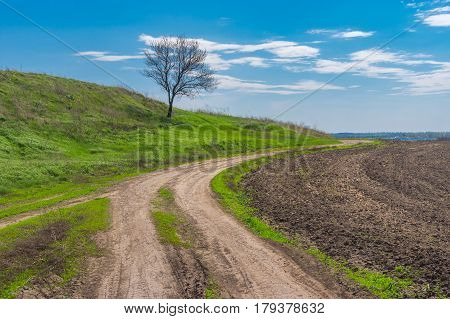 Landscape with earth road and lonely apricot tree at early spring season