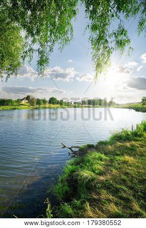 Green grass near calm river in summer
