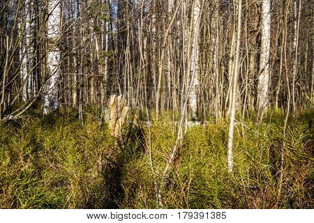 Spring forest after hibernation, fresh shoots of forest grasses