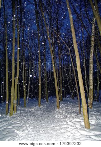 winter Park in Moscow at night in the snow