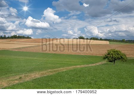 Green meadow with footpath and tree and brown, partly already harvested fields in hilly landscape in summer