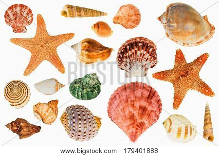 shellfish on the Isolated White Background ,