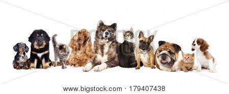 Group of dogs and cats on white background
