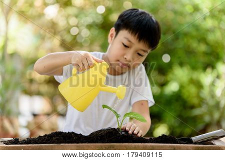 Boy Watering On Young Seedling