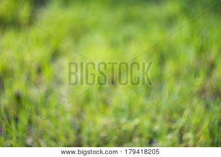 Bright green grass blurry background with unusual swirly bokeh