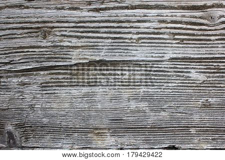 weathered spruce wood plank real wooden texture for your design ( Picea abies )