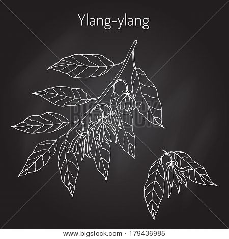 Branch of ylang-ylang with flowers, vector illustration