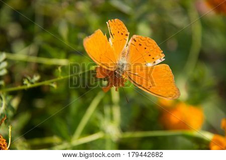 orange batterfly with flora. soft focus orange batterfly color sit on flower. Colorful orange batterfly with green leaf.