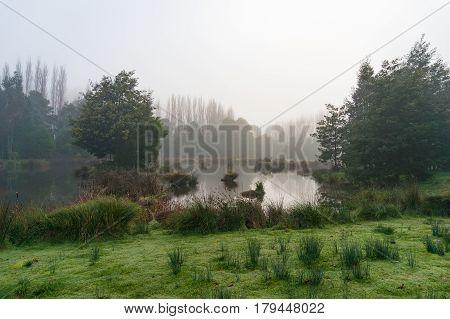 Mysterious Landscape Of Marsh In Fog