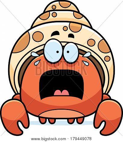 Scared Little Hermit Crab