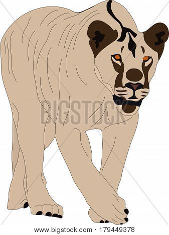 Portrait of a  fierce walking lion, hand drawn vector illustration isolated on white background