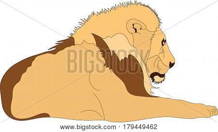 Portrait of a lying male lion, hand drawn vector illustration isolated on white background