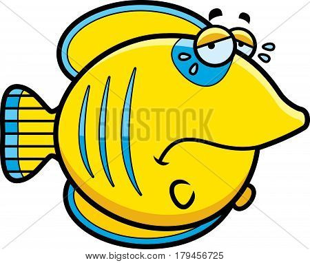Crying Cartoon Butterflyfish