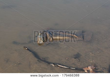 A muddy, dirty, rubber boot left in the water