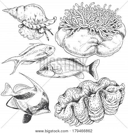 Hand drawn underwater natural elements. Sketch of reef animals. Monochrome set with fishes mollusks and actinia. Black and white illustration coloring page.