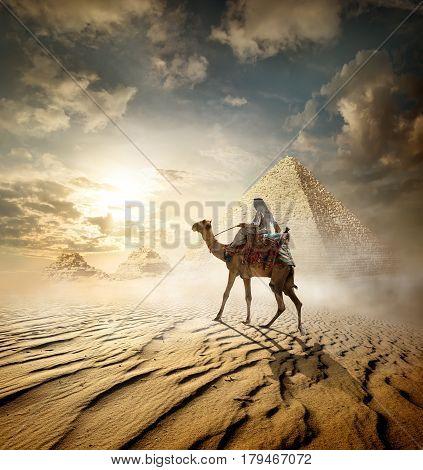 Bedouin on camel near pyramids in fog