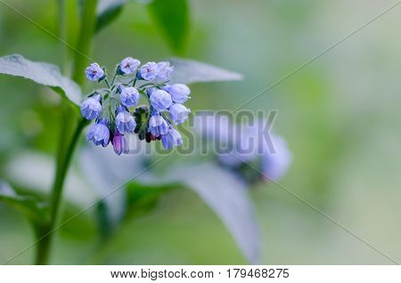 blue forest flowers on green blurred background