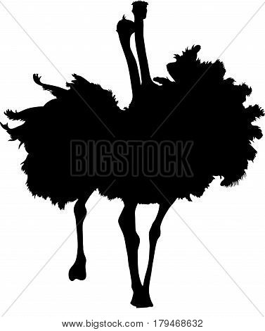 Silhouette of two fighting ostriches, hand drawn vector illustration isolated on white background