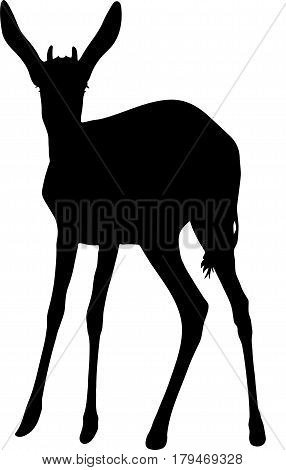Silhouette of a standing springbok antelope, hand drawn vector illustration isolated on white background