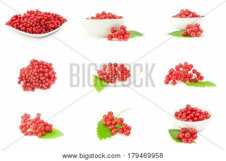 Collage of red berries cluster of guelder rose  close-up isolated on white background