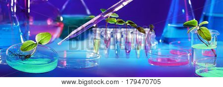 Biotechnology And GMO - Plants In Test Tubes - Laboratory Of Biochemistry