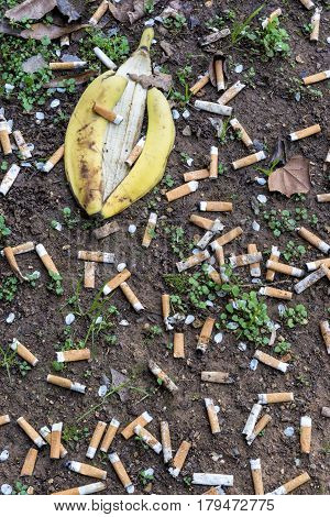Vertical shot of Cigarette Butts and a Banana Peel Littering the Ground.