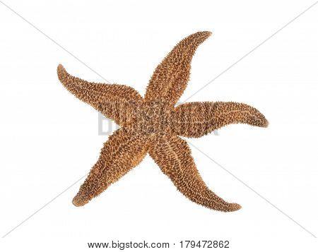 Skeleton of starfish on white background top view