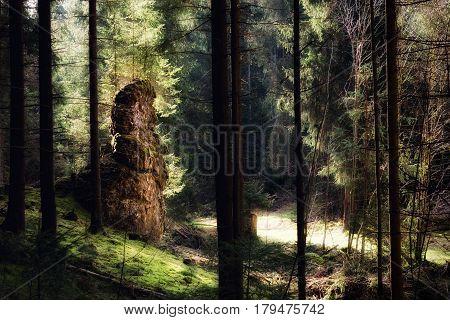 Typical limestone rock in morning sunlight in Wental Baden-Wuerttemberg Germany.