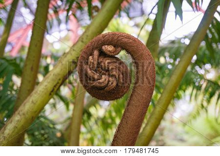 Fern Sprout, Shoot In Spiral