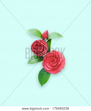 Camellia on Blue - green background. Spring Japanese flower with a saturated red color. Bouquet of red camellia all elements are isolated and editable. Camellia brooch sticker patch