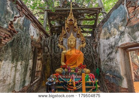 Unseen Thailand Ruins of old temple with a Bodhi tree root Wat Sang Kra Tai Angthong Thailand (Public property)